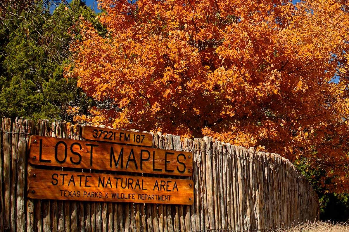 lost-maples-vanderpool-texas.jpg