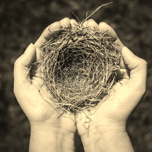 Nest-2.jpg