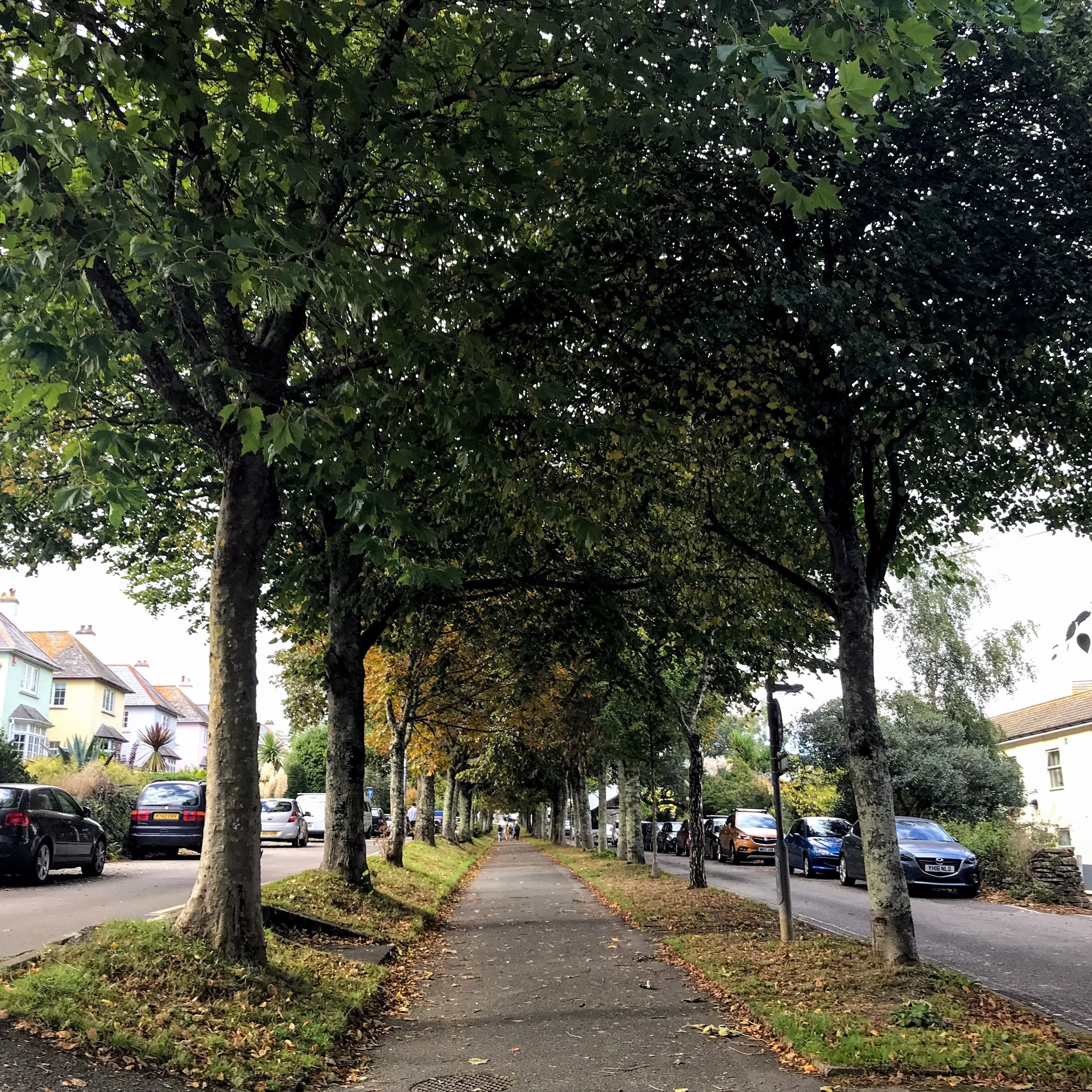 trees+falwriting.jpg