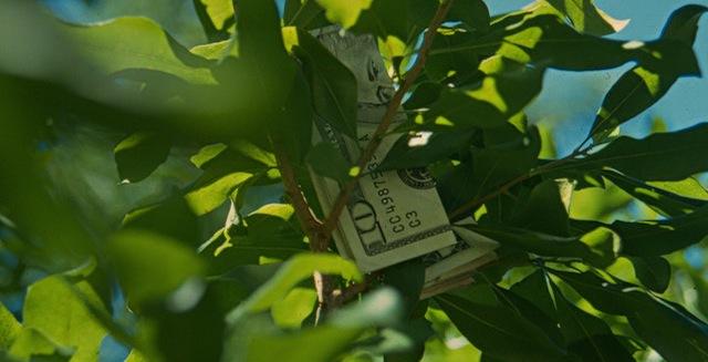 money-on-tree1.jpg