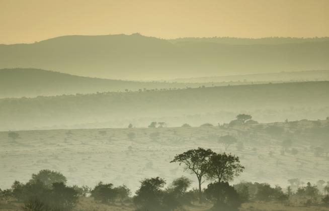 savannah_grassland_africa_shutterstock_q_49550.jpg