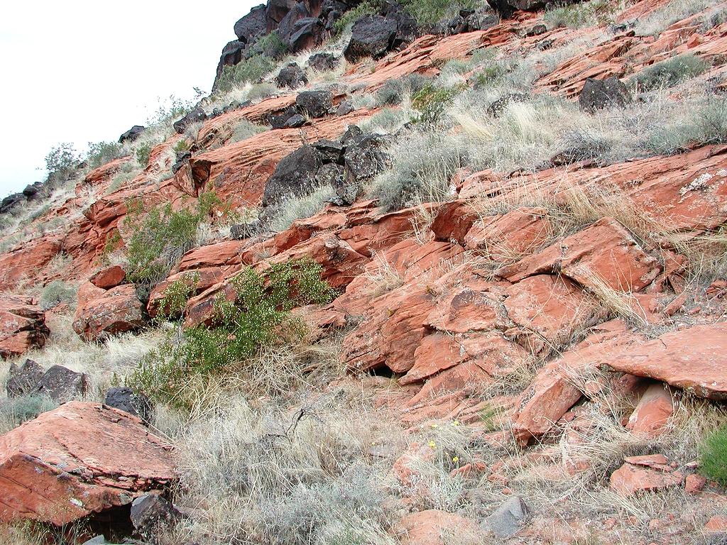 Utah Banded Gila Monster Habitat #3.jpg
