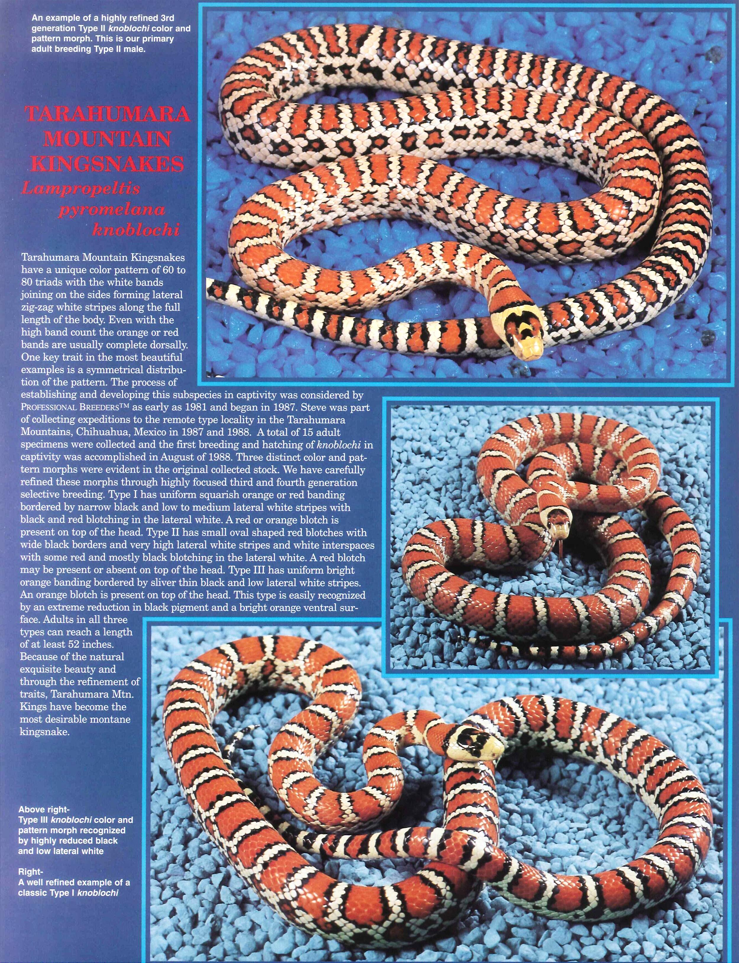 Professional Breeders Brochure_8.jpg
