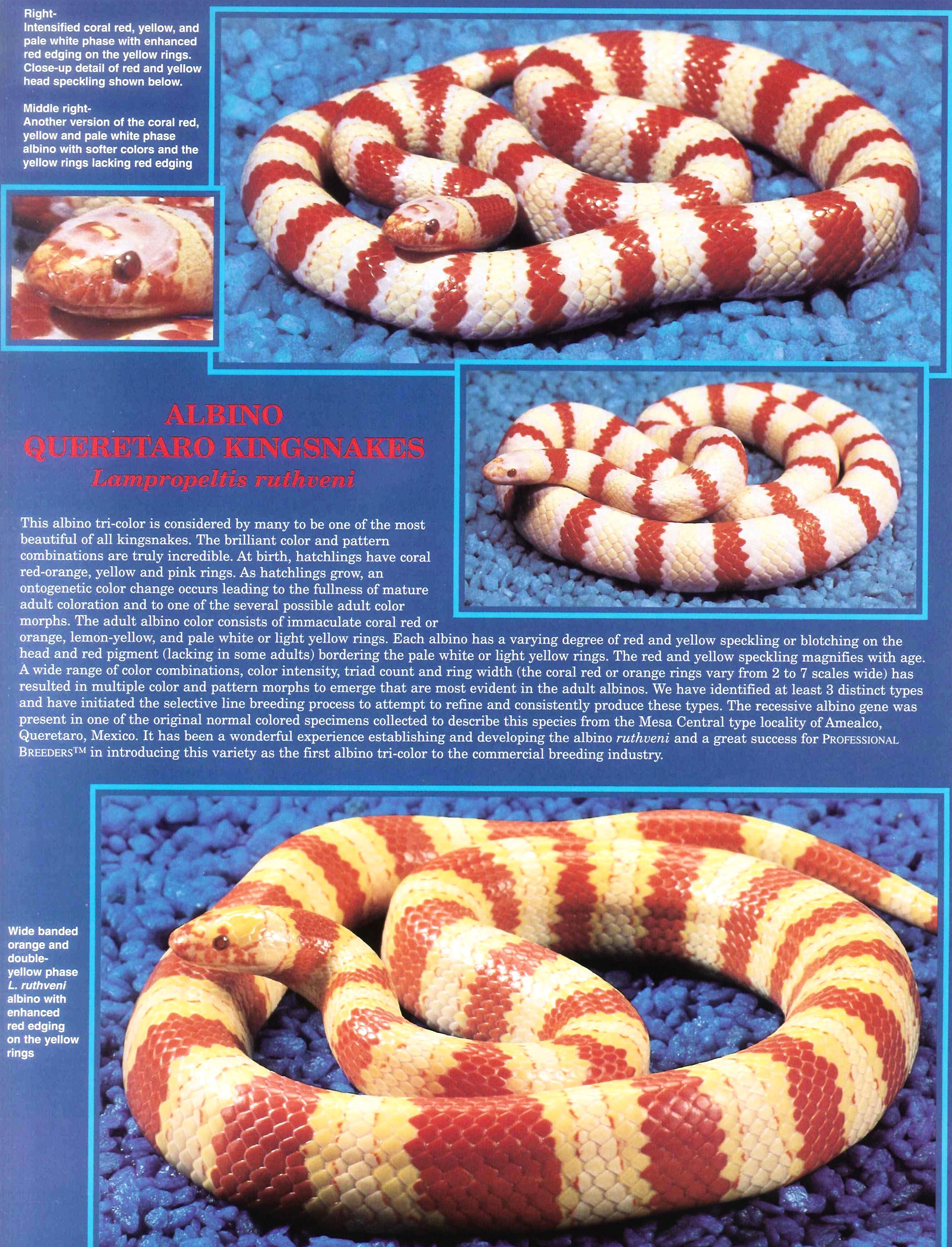 Professional Breeders Brochure_9.jpg