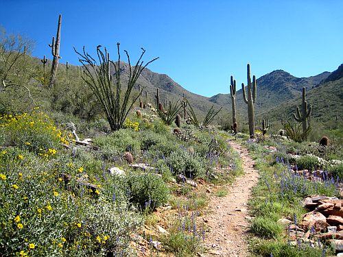 Trail on the outskirts of Wickenburg, Arizona