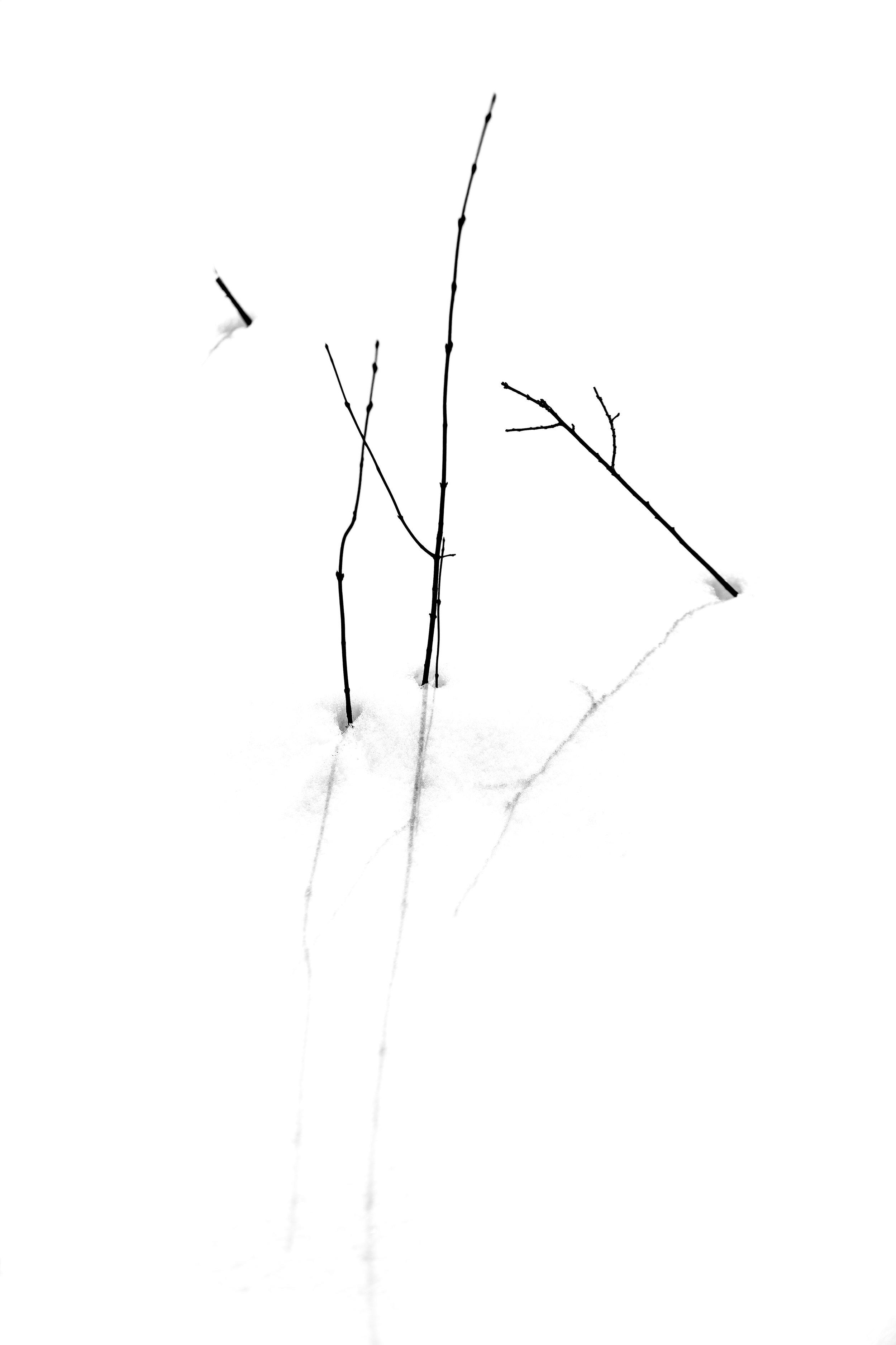 2X6A3668-2.jpg