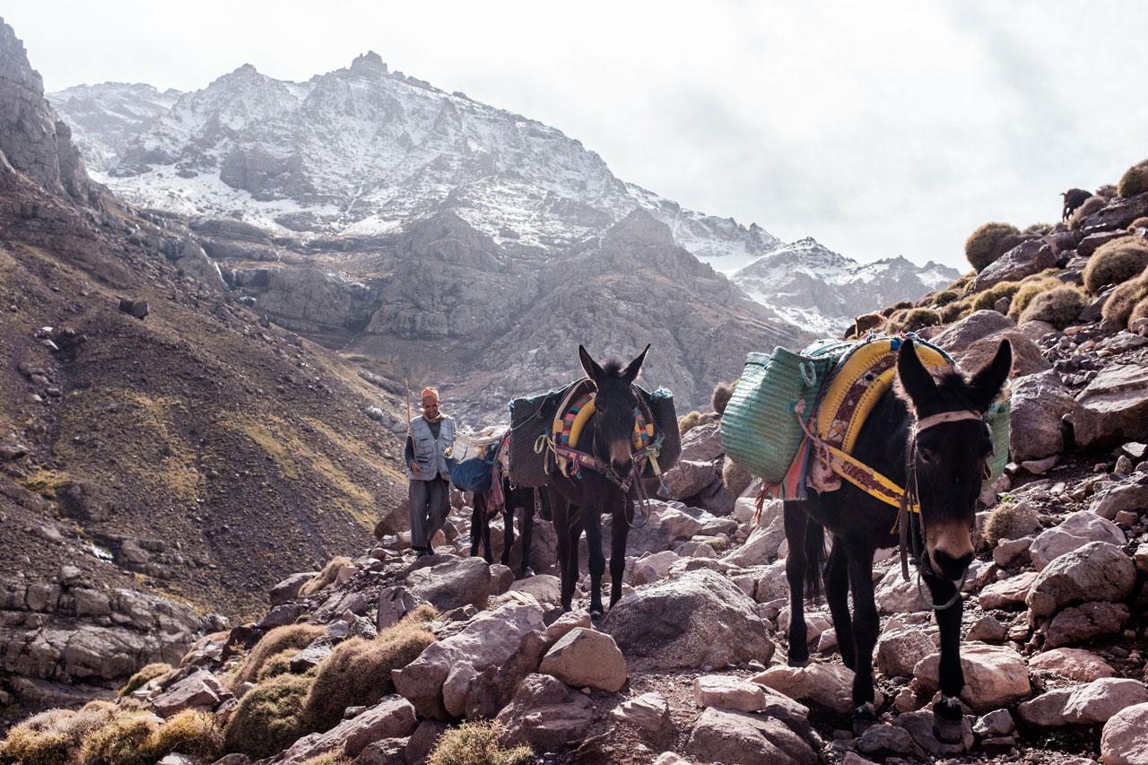 morocco atlas mountains imlil berber with donkeys