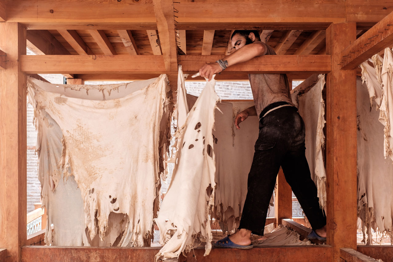 morocco fez leather tannery man drying leather