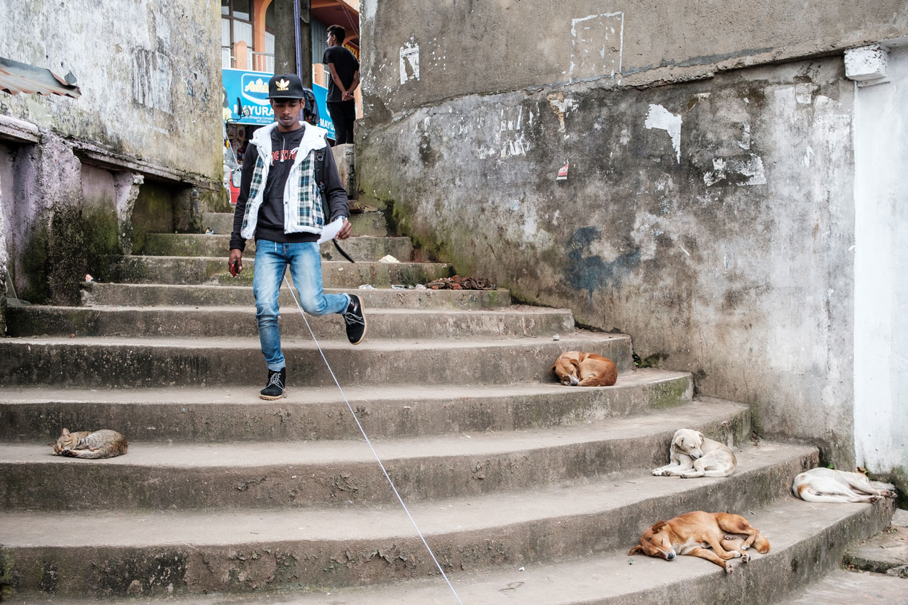 Copy of man walking down stairs with dogs and cats in haputale sri lanka