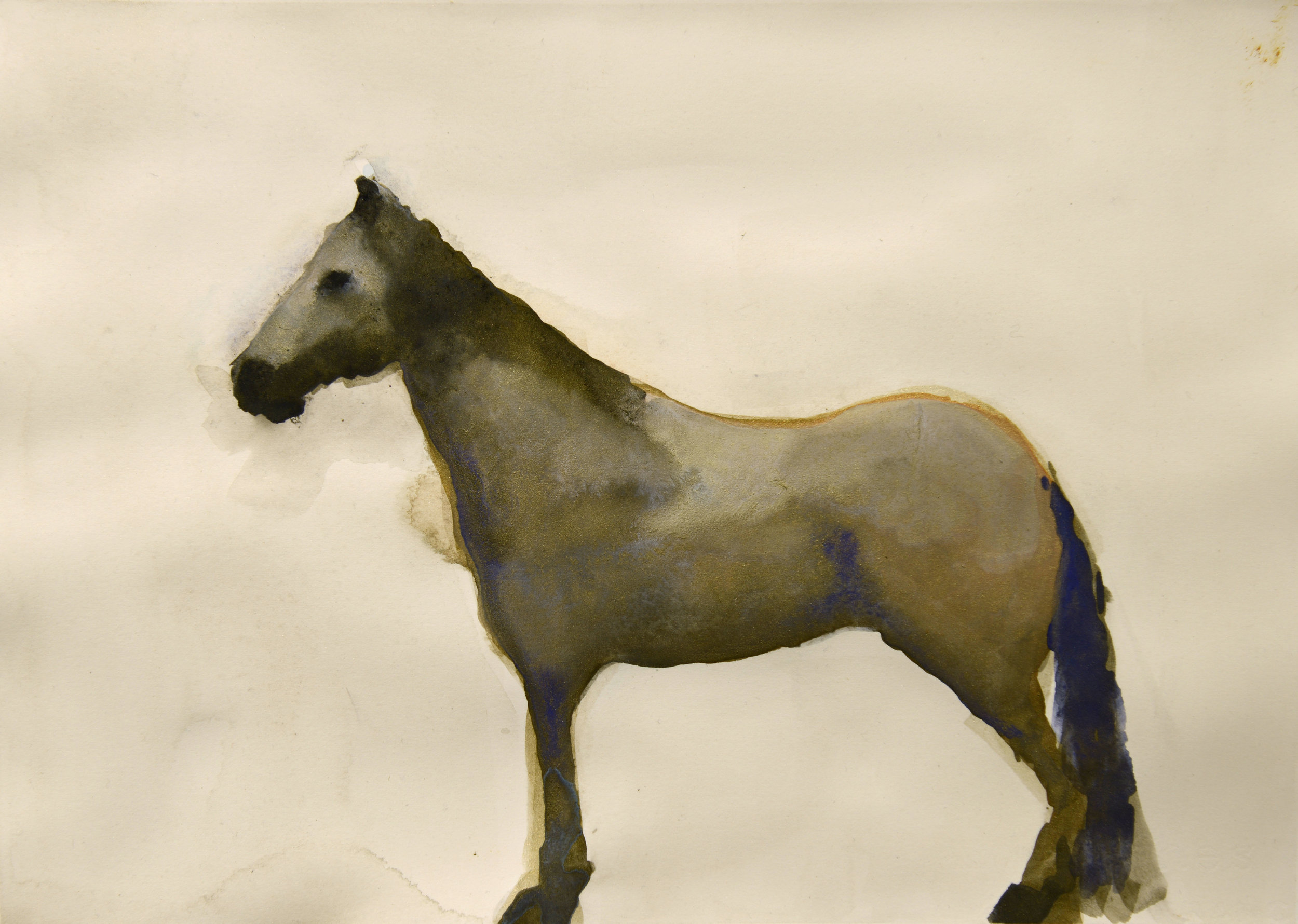Grey Mare_9.5x13.25_mm on paper.jpg