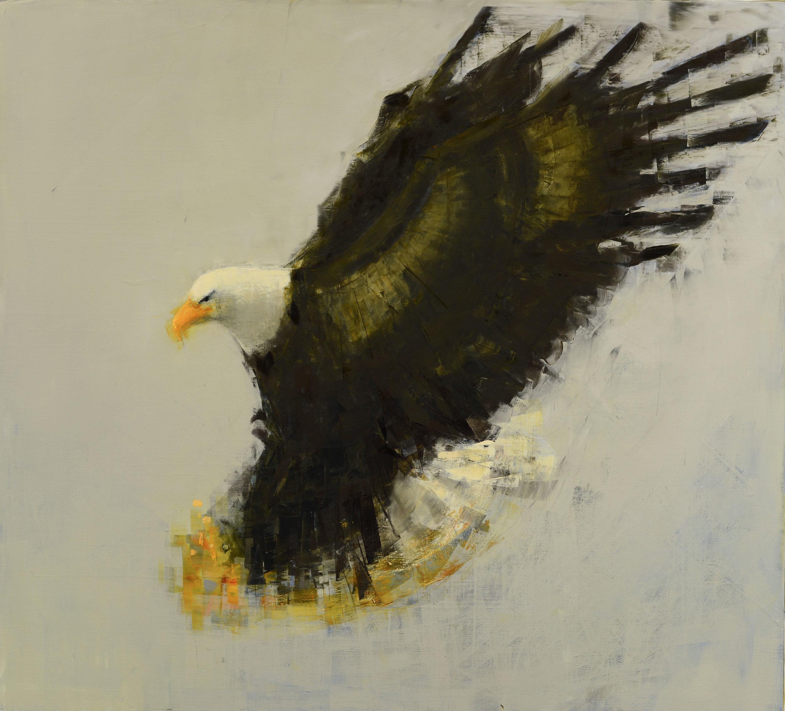 Bald Eagle (Hunting)