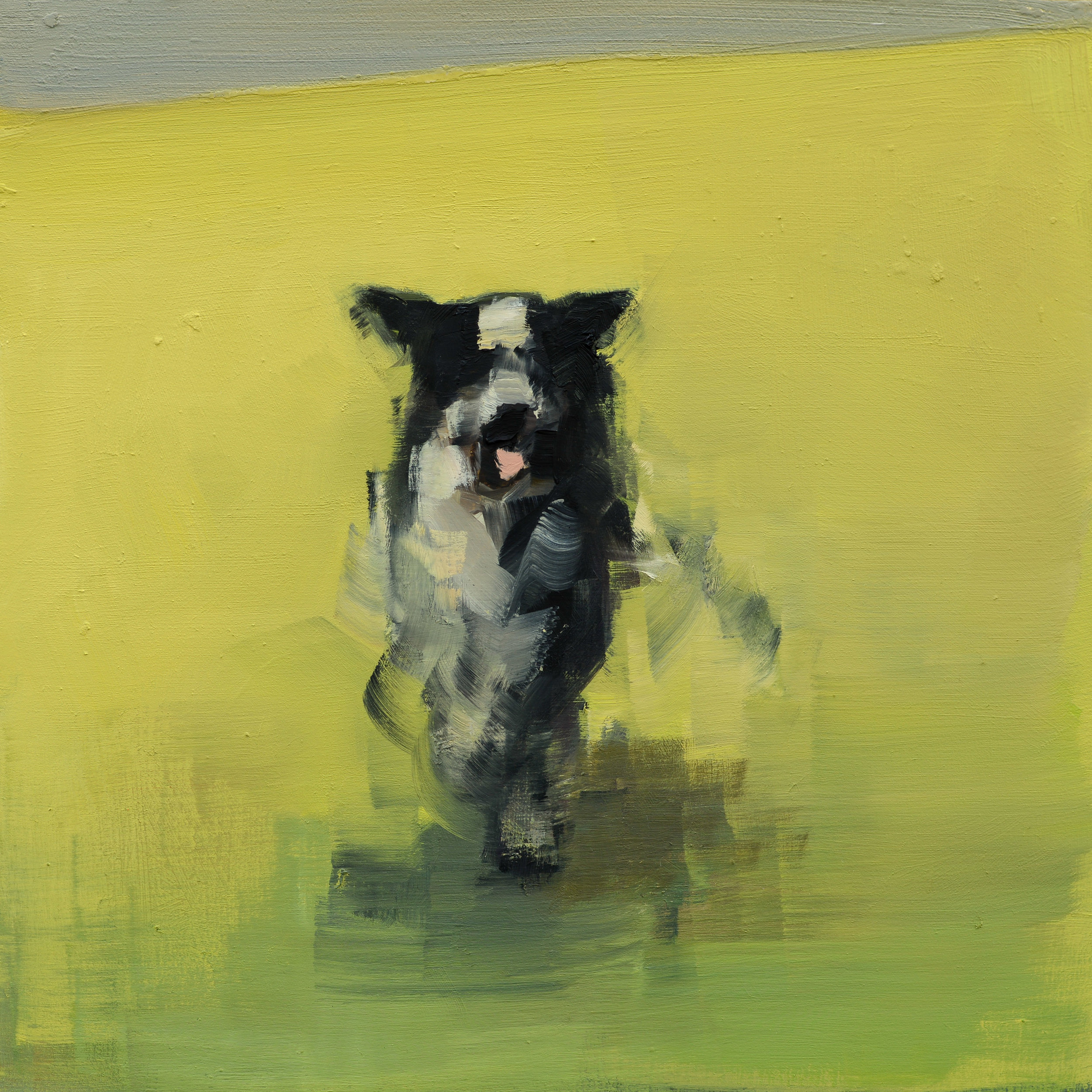 Collie (Running)_10x10.jpg