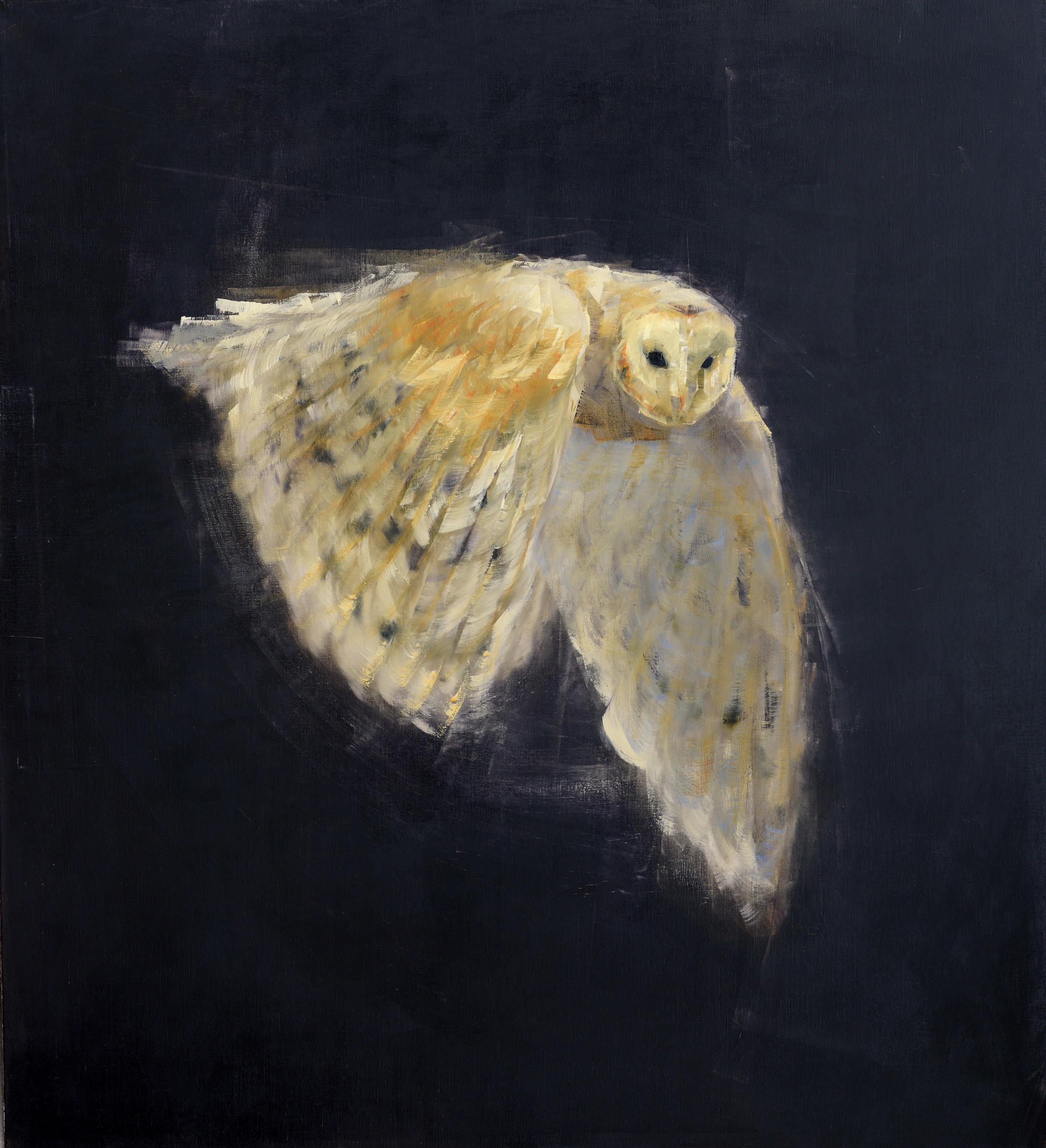 Barn Owl in Flight_64 x 58.jpg