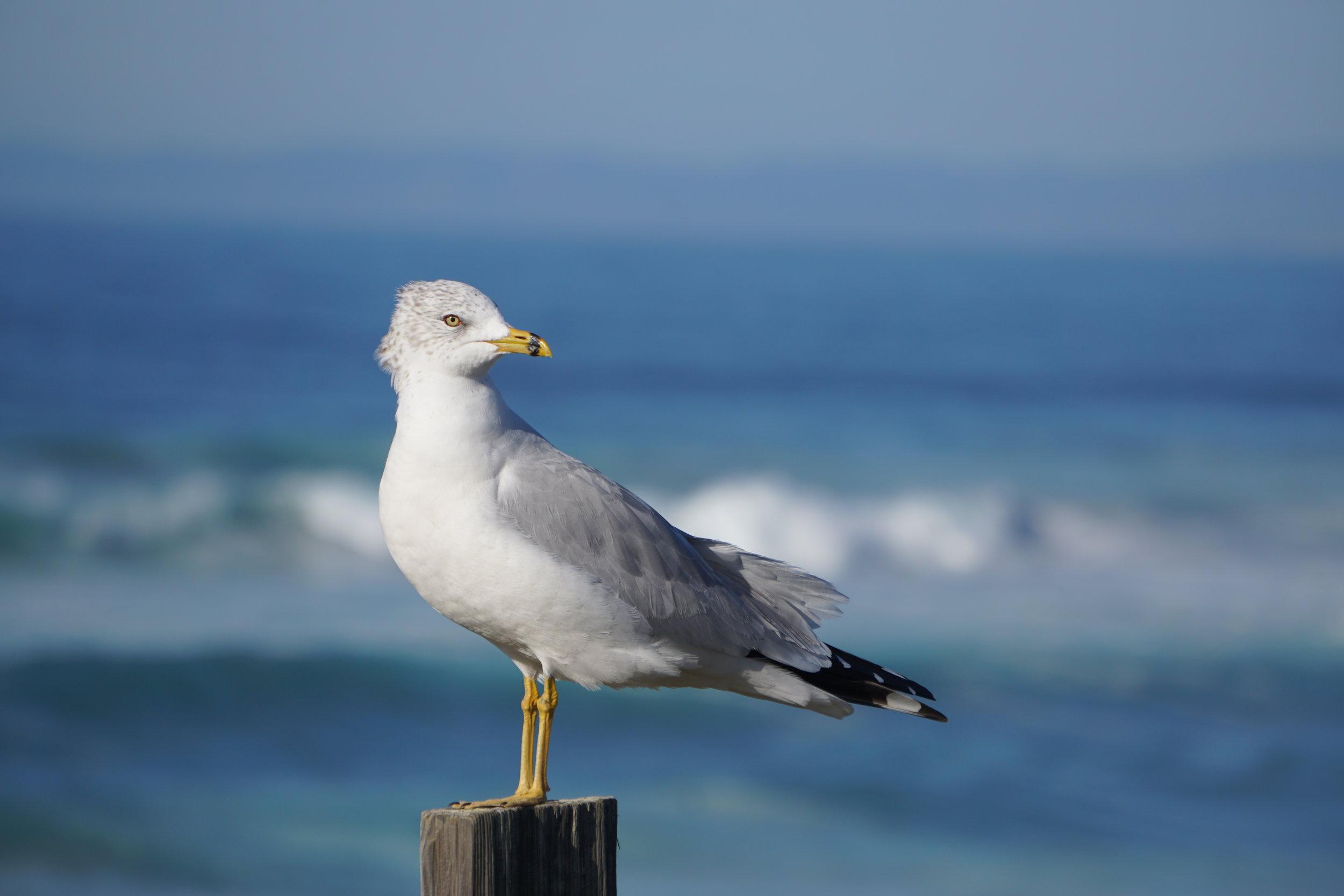 Bird Edit.JPG