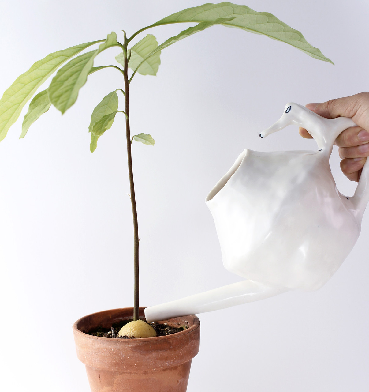 Never let your green friends perish with this satirical pot.