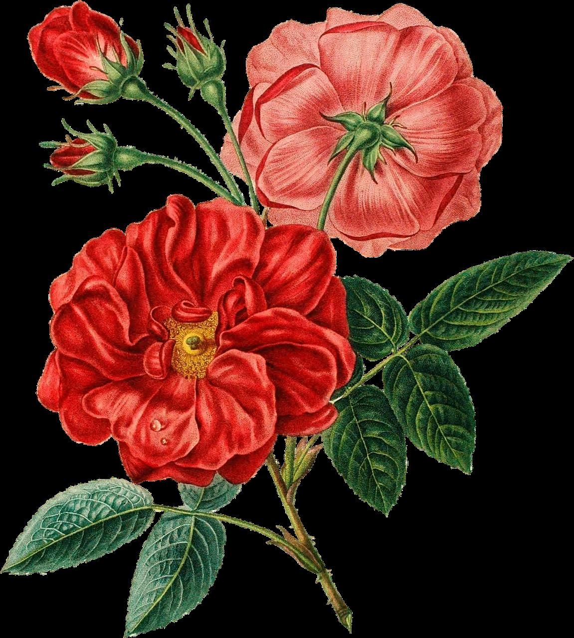 floral-illustration