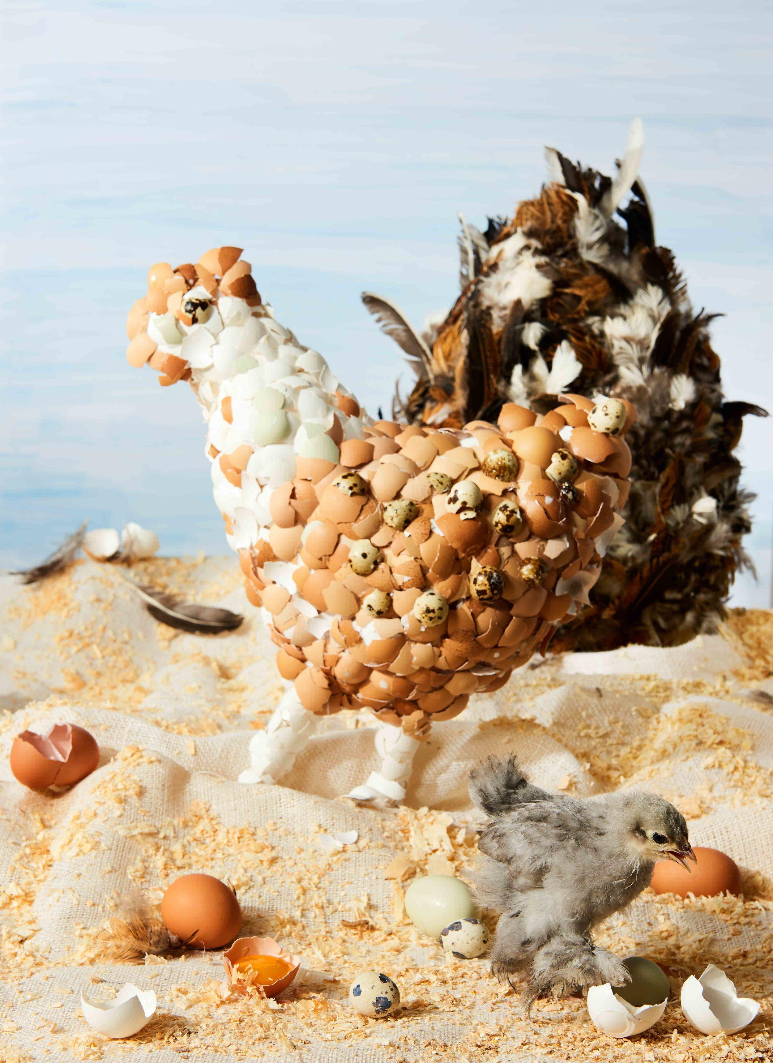 Chicken_Egg_Situation 2.jpg