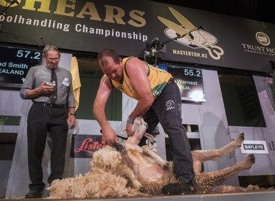 Australian shearing legend Shannon Warnest leads his country to another shearing test victory over New Zealand at the Golden Shears in Masterton NZ. PHOTO/Pete Nikolaison, Golden Shears Media Group