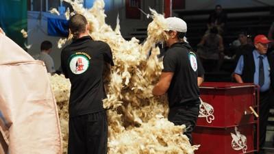 preping the wool.jpg