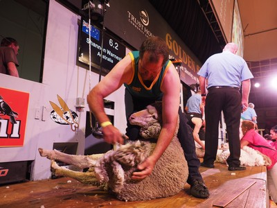 Shannon Warnest trans tasman winner Aus.jpg