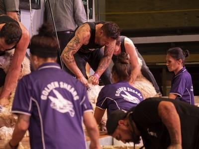 Maori_Pakeha Shearing