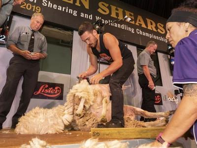 Encouragement Shearing