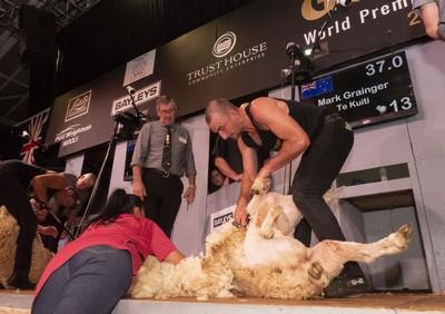 open shearing final