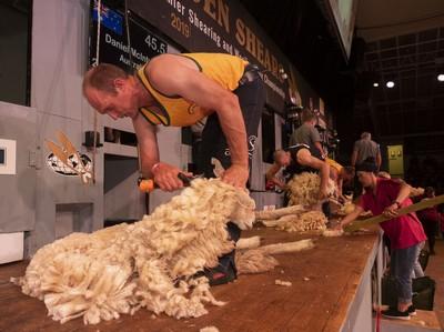 Trans-TasmanTest Shearing