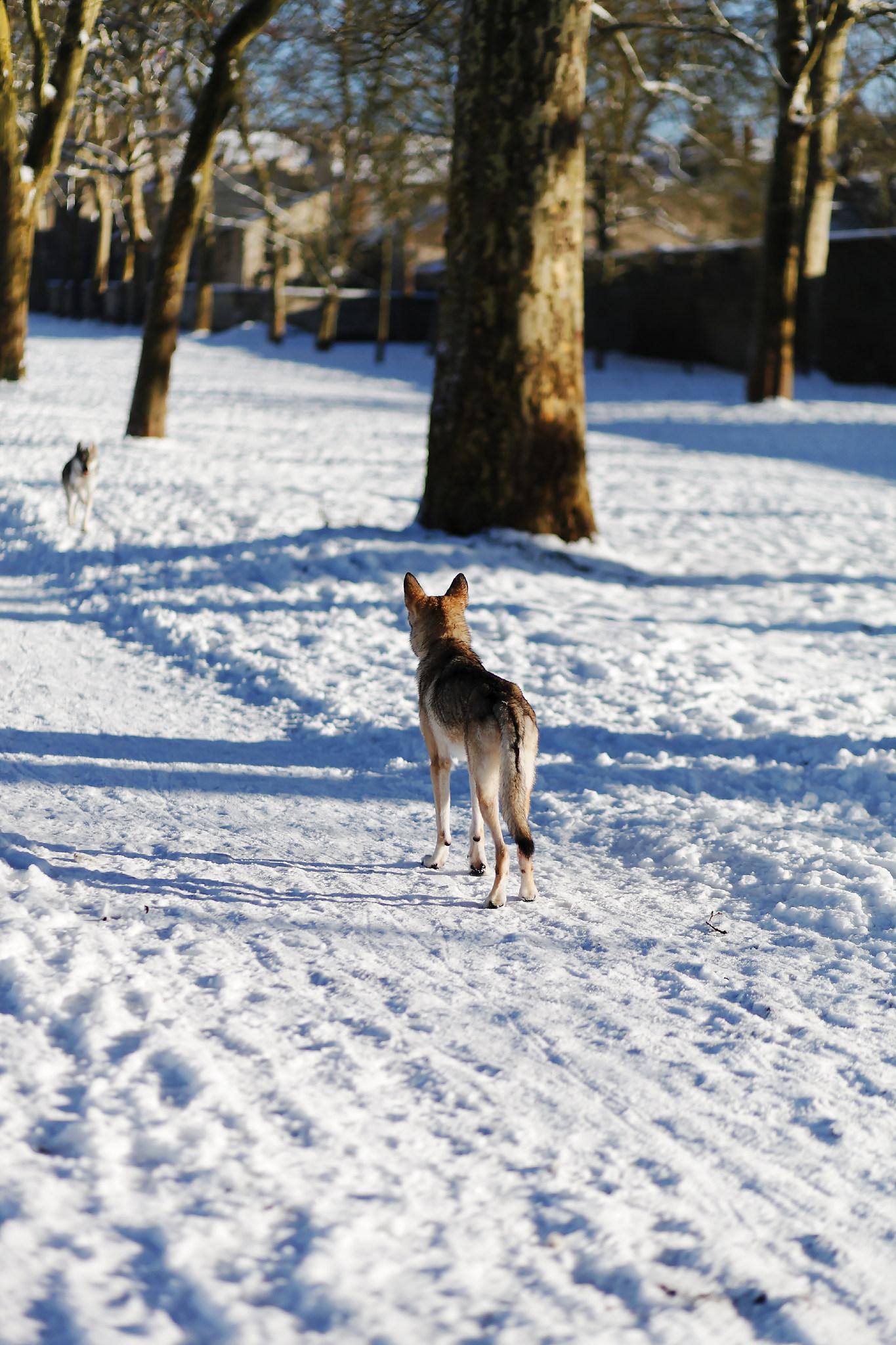 VERSAILLES SNOW LES INDISPENSABLES PARIS (4).jpg