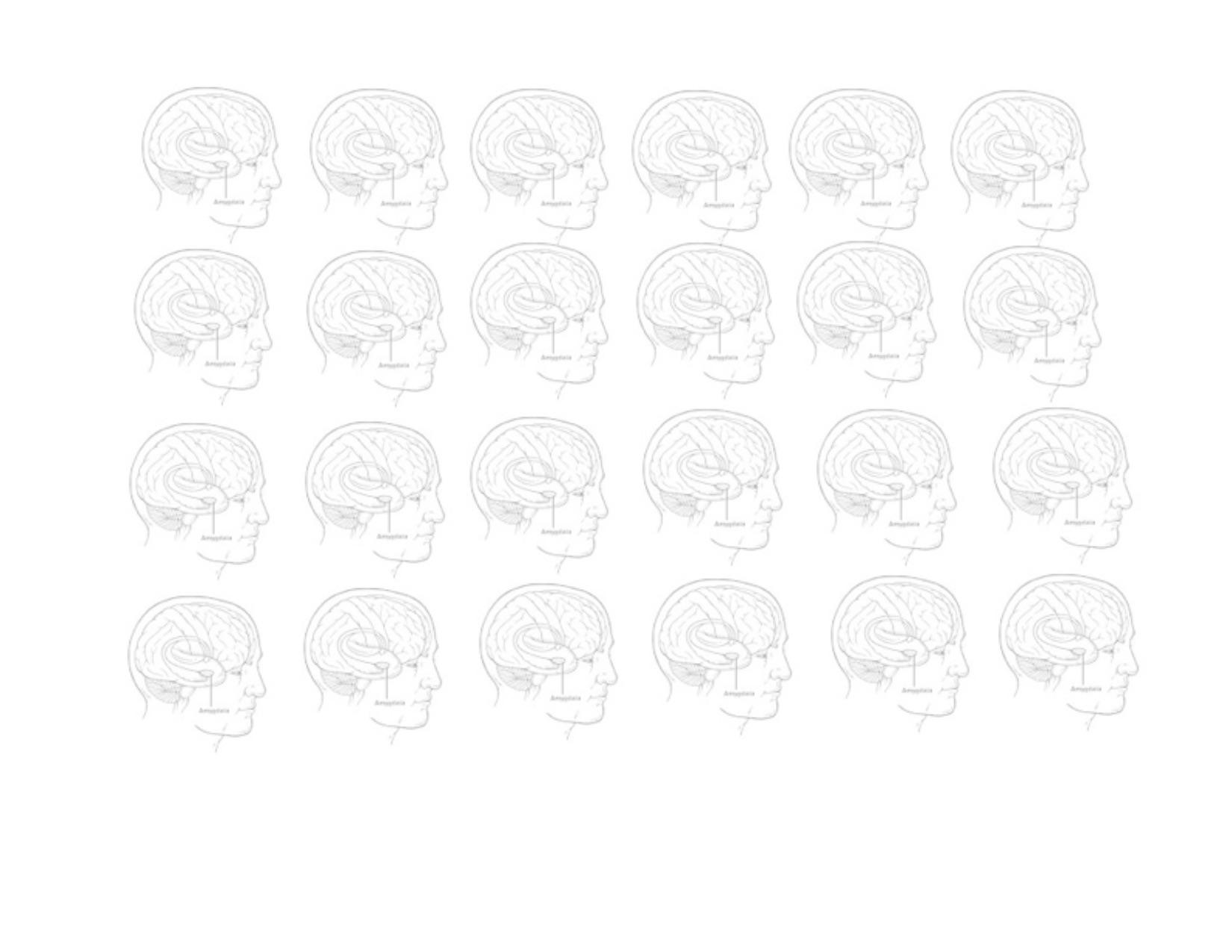 amygdala group BW.jpg