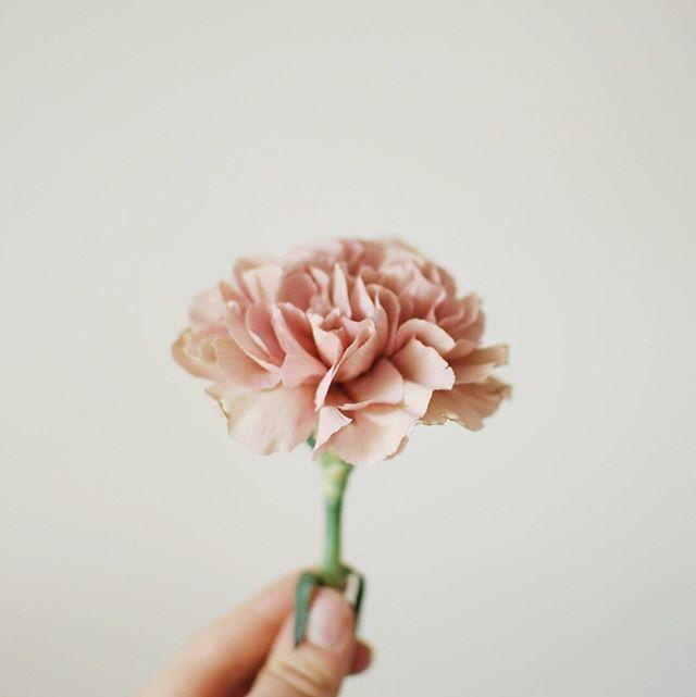 Un peu,  beaucoup, passionnément , à la folie. ⠀⠀⠀⠀⠀⠀⠀⠀⠀ #pruneetsibylle #fleur #poesie