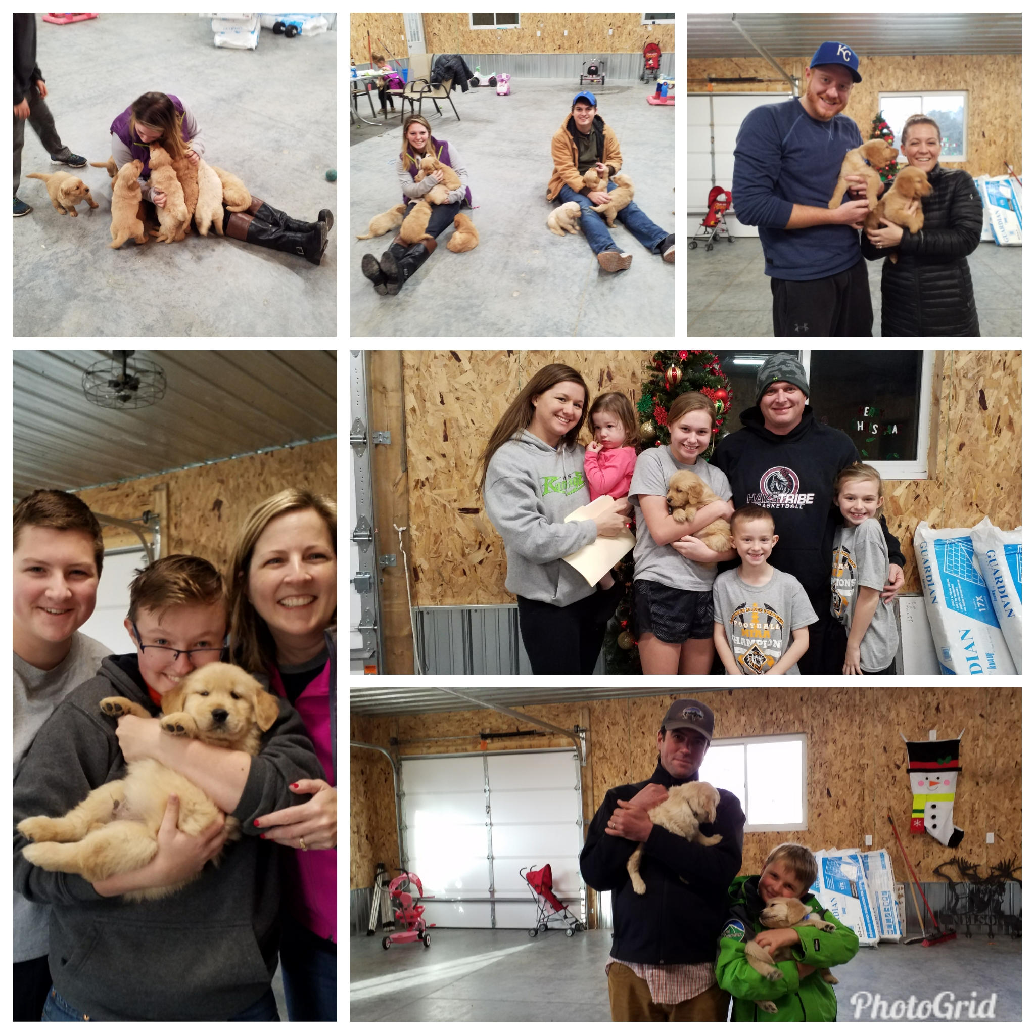Here's how new owners pick their puppies.  Our puppies are used to us handling them. When they are old enough to have their adopted families come see them, they are welcoming to cuddling and play time by everyone.