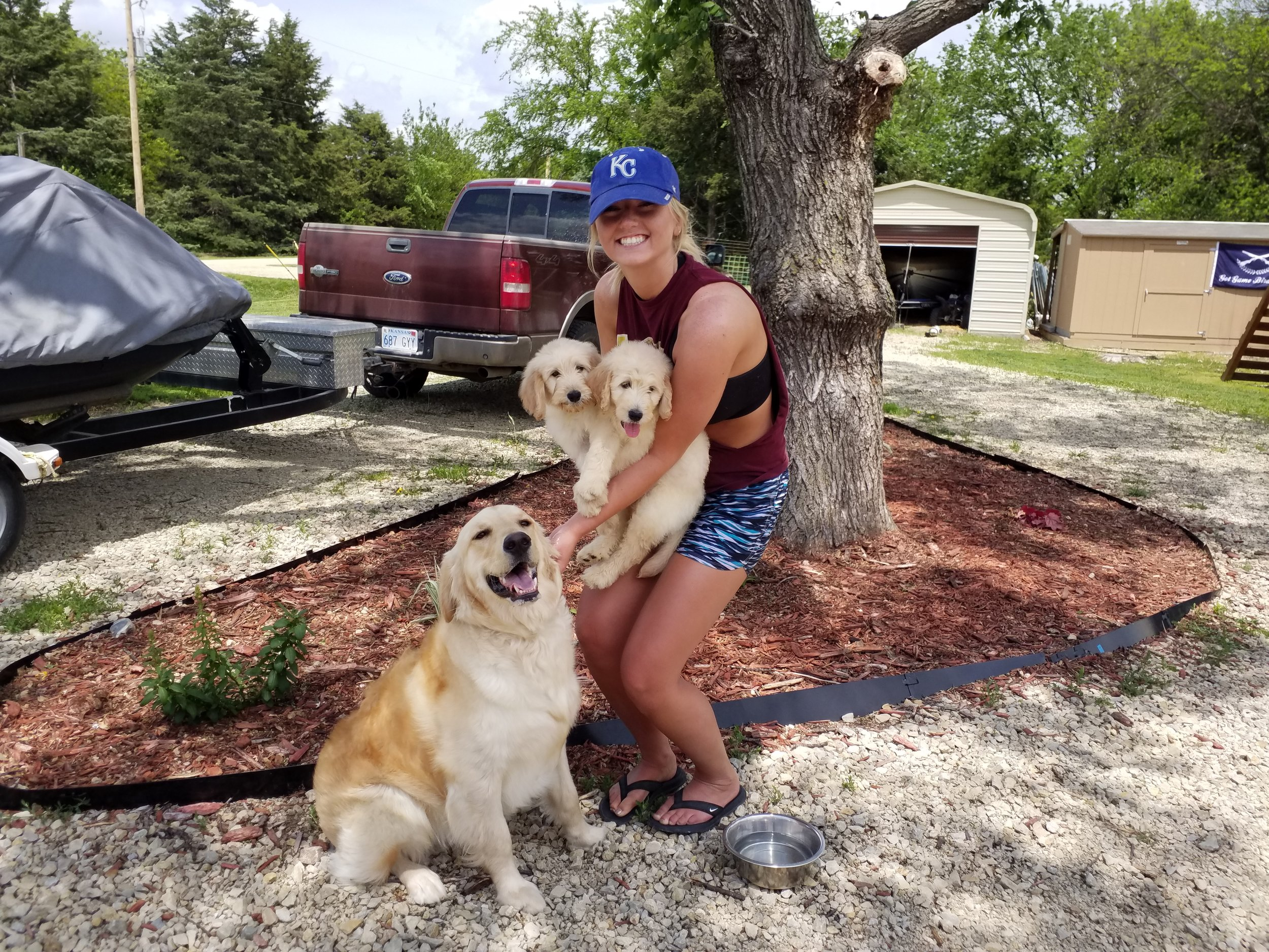 Pups with New Owners on New Adventures!! — Got Game Bird Dogs