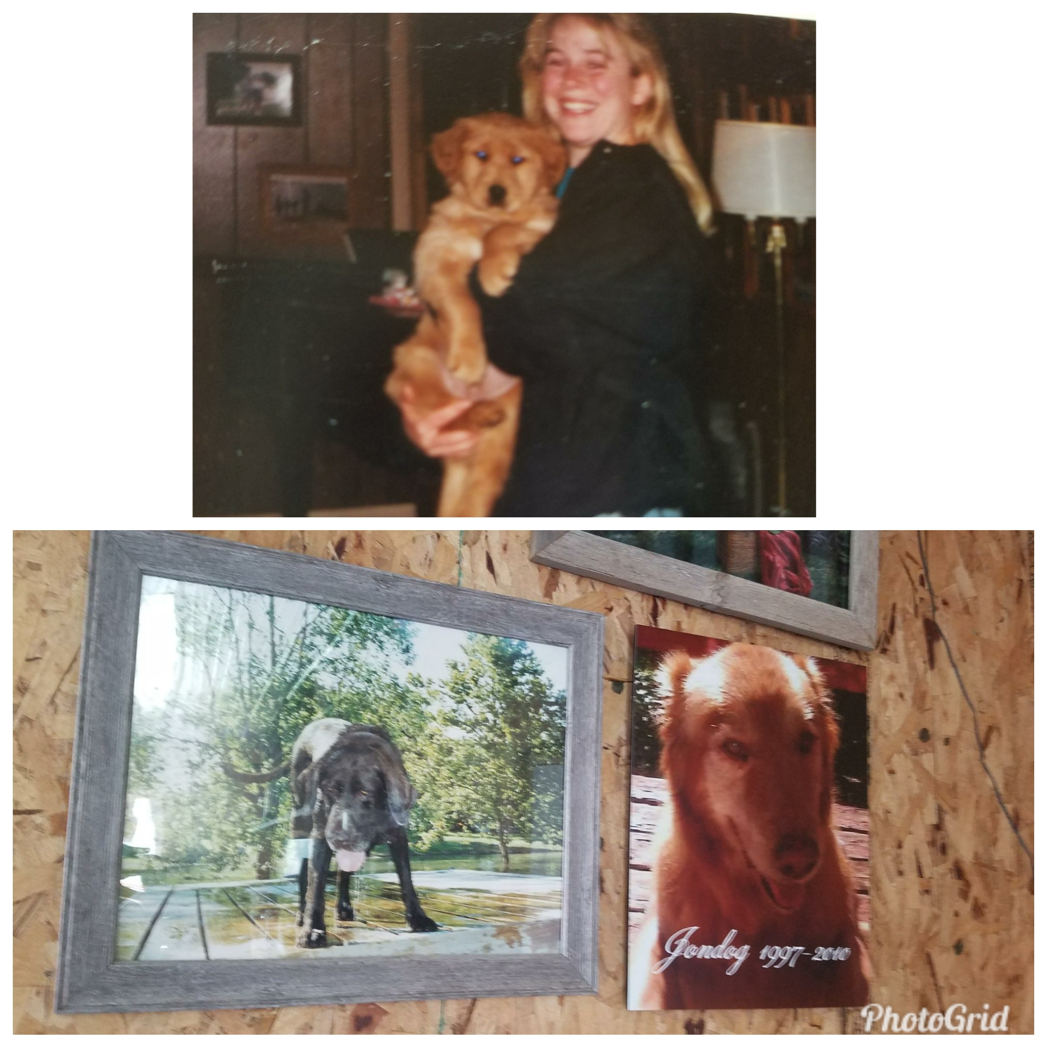 "When Casey passed away in 1996, I spent considerable time looking for someone to fill that void. Jonny (pictured at top as a puppy) was my next love. Jonny ""Jondog"" finished high school with me, went to college with me, was there when I got my first teaching job, and stood at the door to greet me when I brought home my son from the hospital. The pictures of both Casey and Jondog hang in our shop to remind us why we do what we do."