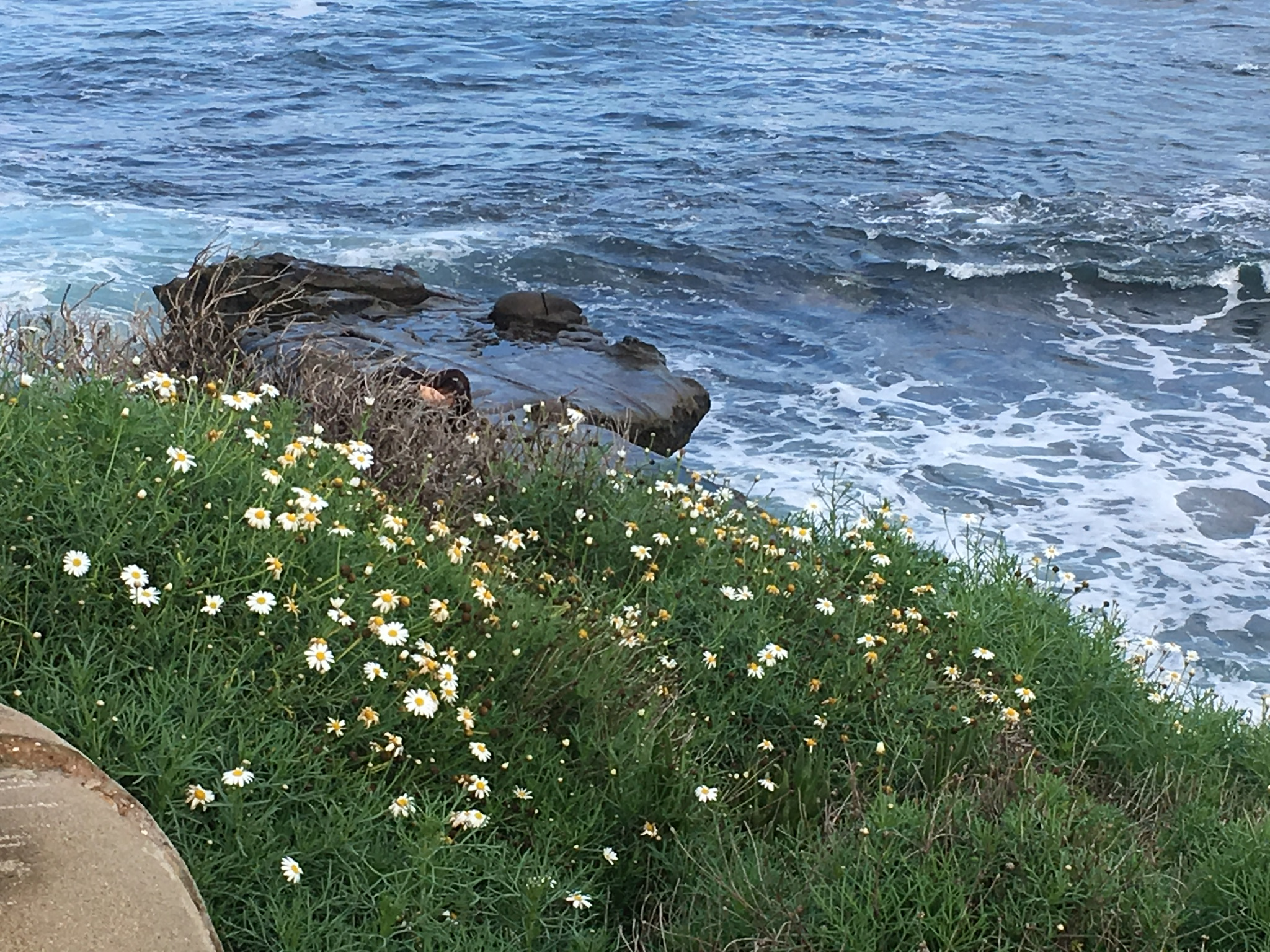 Blue water and flowers along the rocky coast.