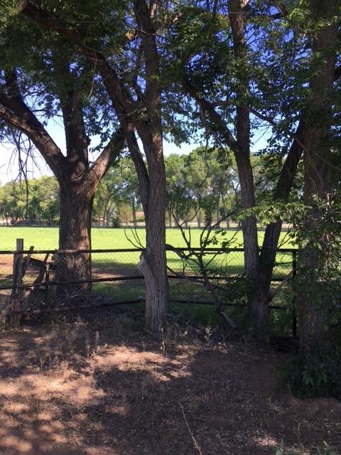 view thru trees.JPG