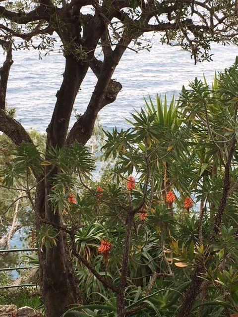 Coastal Garden, Monaco