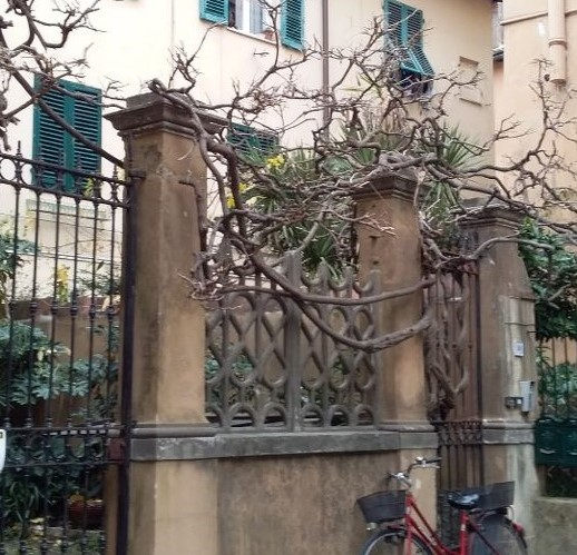 Bare wisteria vines await the blooms of spring