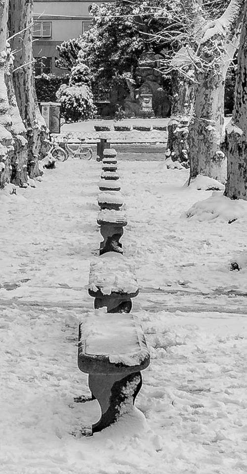 The big snow of 2018 created a magical winter tableau. We're still waiting for snow this year. Photo by David Priest, used with permission.