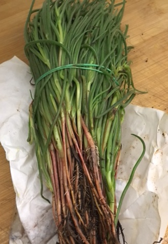 Agretti, roots and all, comes wrapped in paper - clean and trim before using.