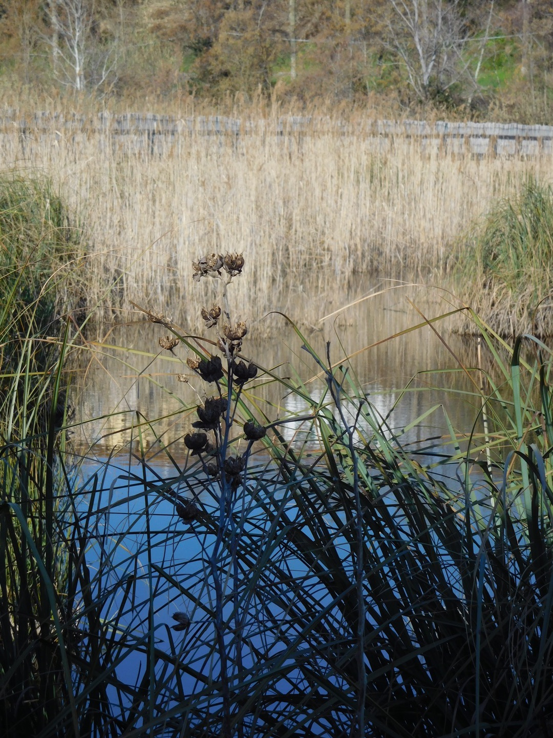 Late winter in the wetlands of Lake Massaciuccoli