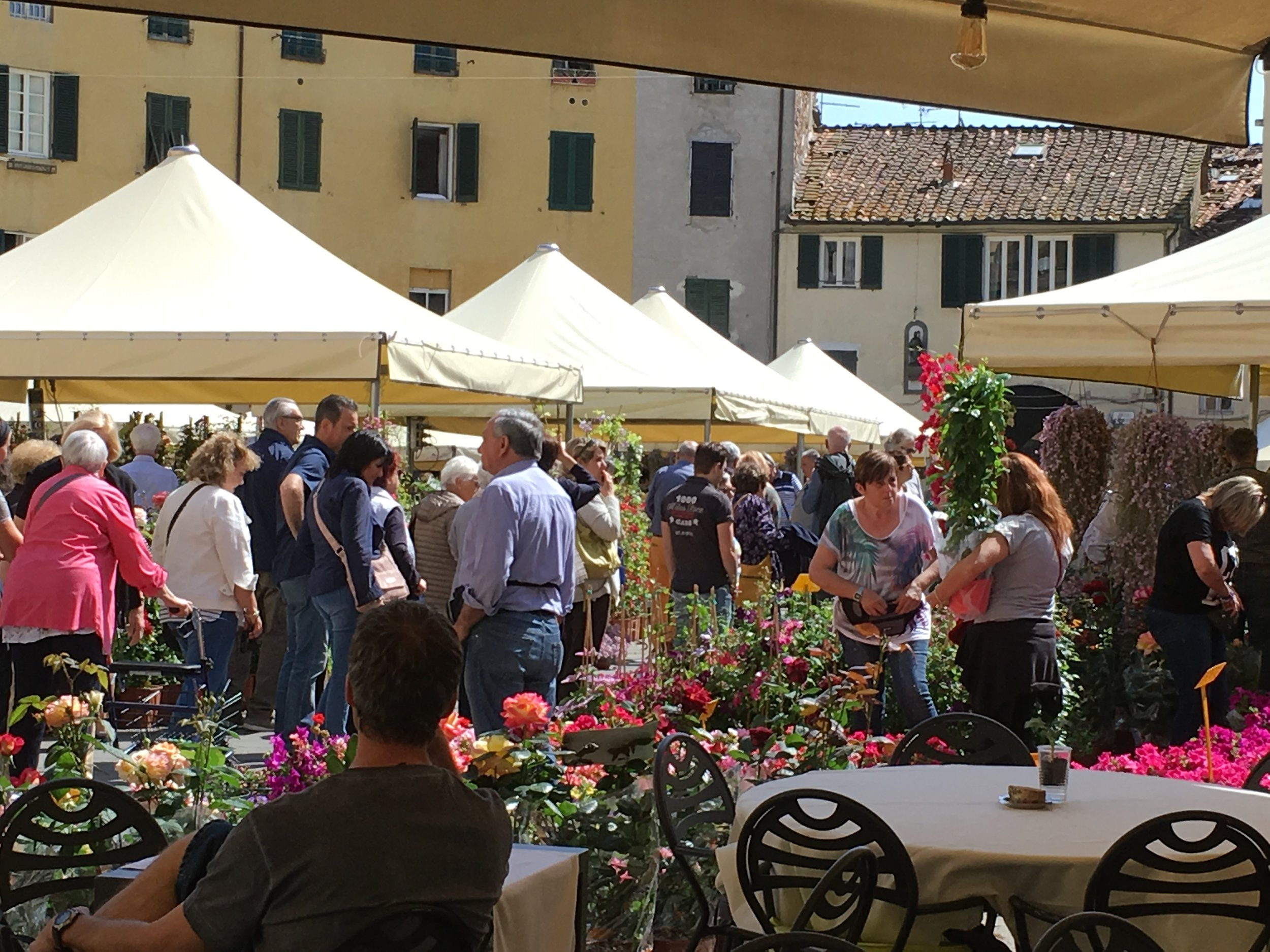Flower market (2018) in Piazza Anfiteatro for the Festa di Santa Zita