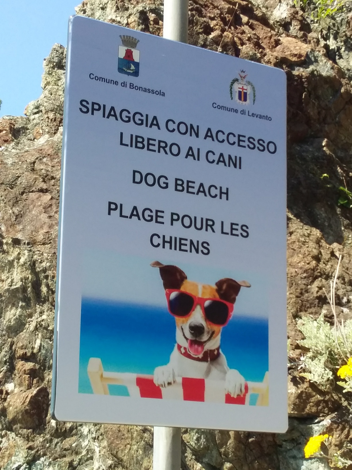 You have to love a town with a dog beach!