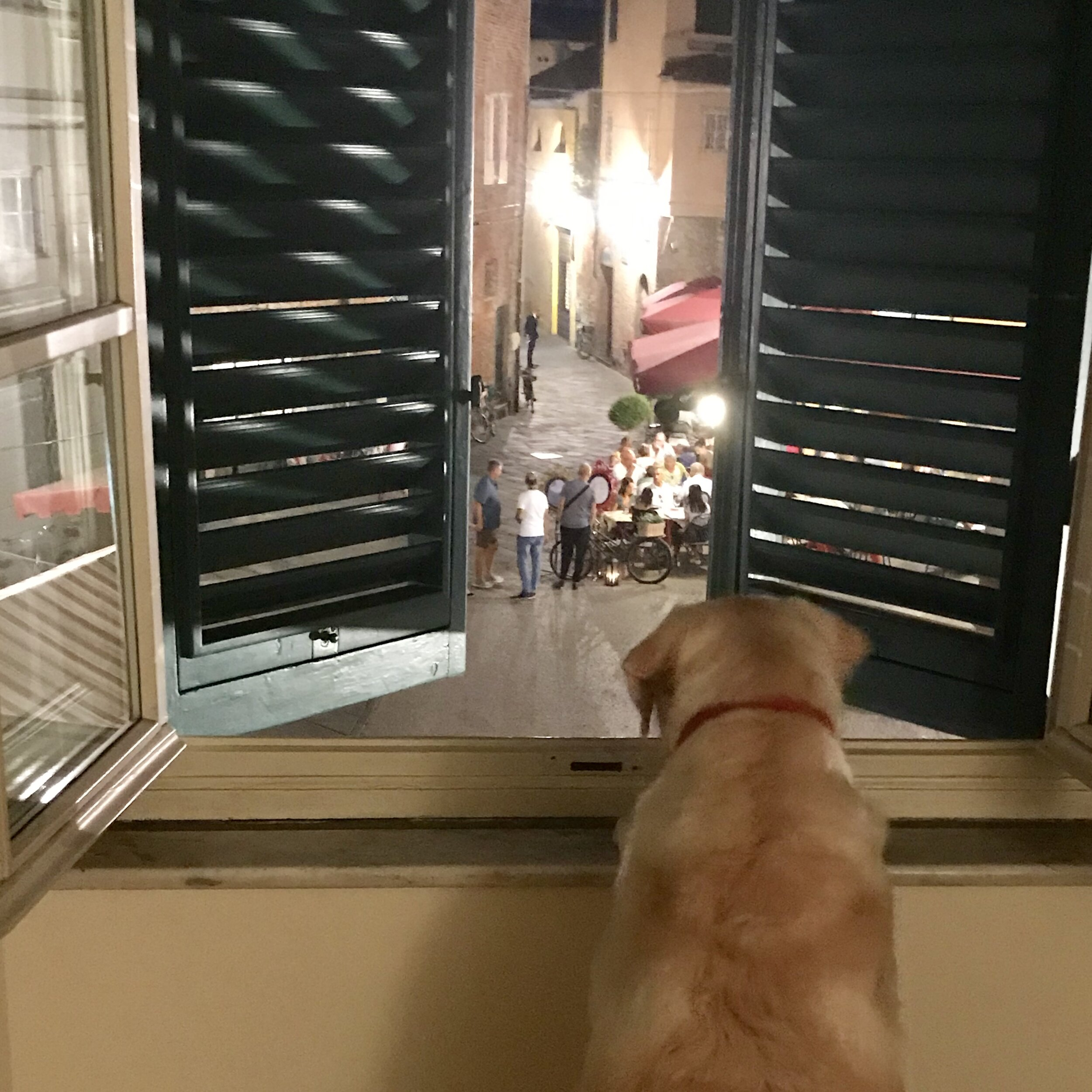 Bodhi checks out the street scene below our apartment in Italy - several days after successfully making the move here from the United States.