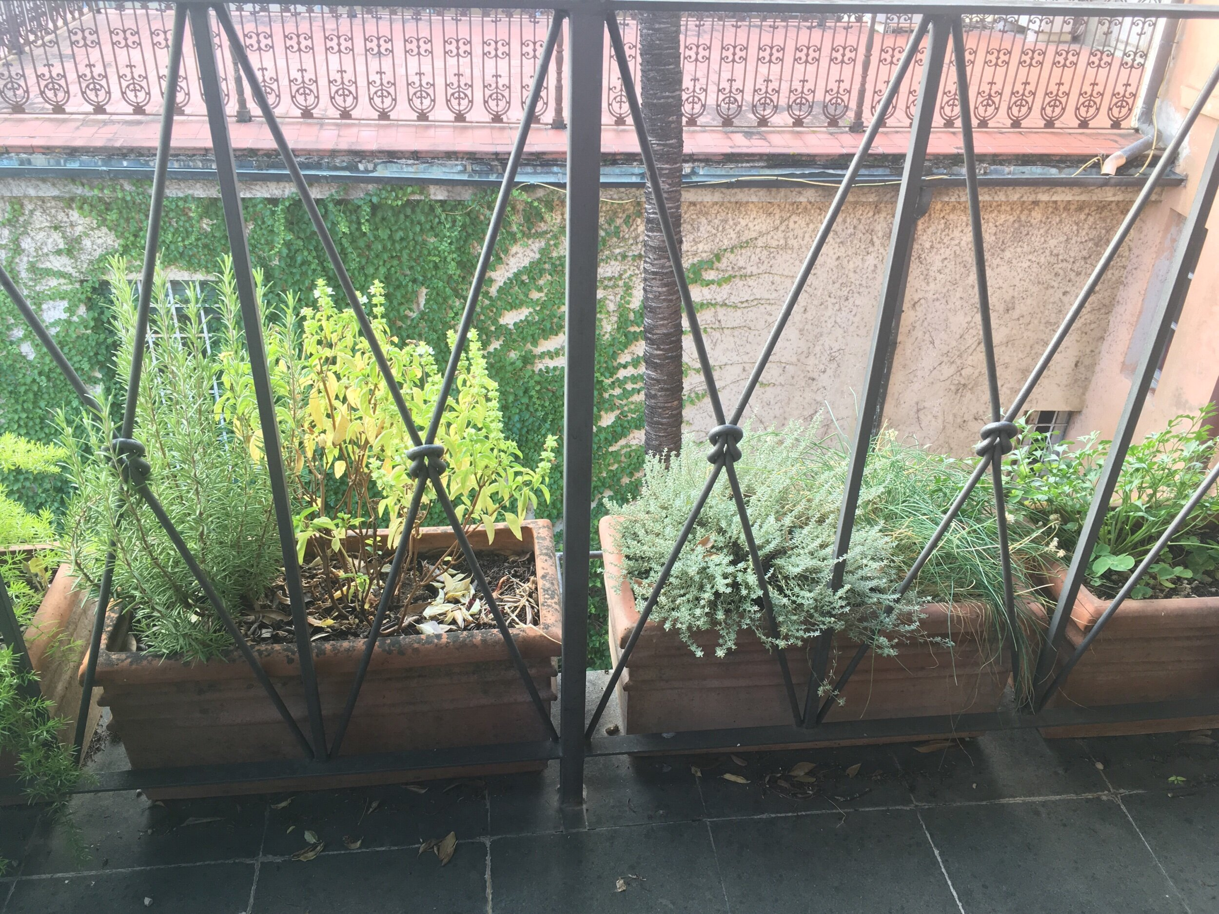 I have some herbs growing on my terrace - but which ones should I use in my peposo?