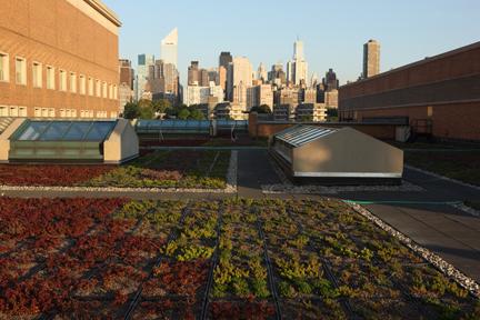 Green Roof 1_tb.JPG
