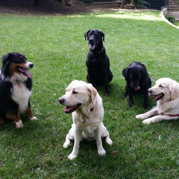 Jake, Rosie, Hugo, June, Cassie