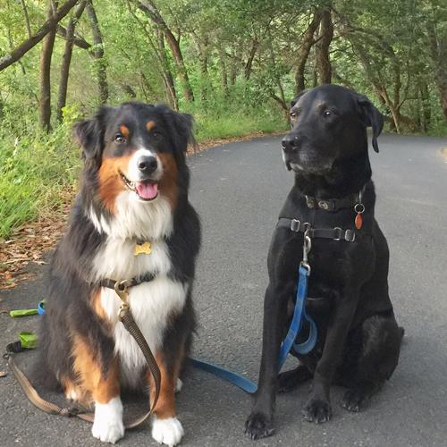 Hugo and Jake