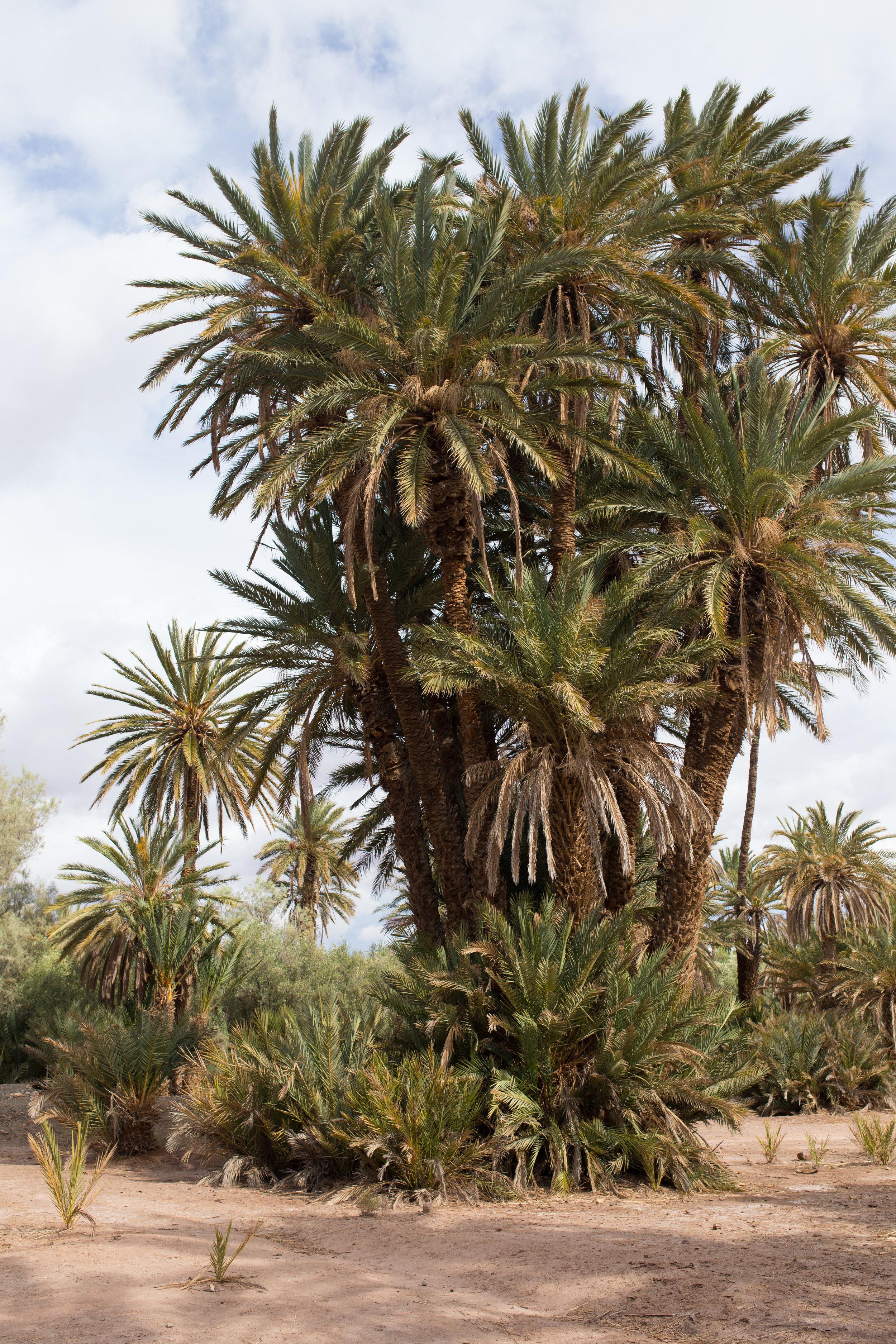 morocco-morocco travel-visit morocco-travel-travel photography-travel photographer-alina mendoza-alina mendoza photography-107.jpg