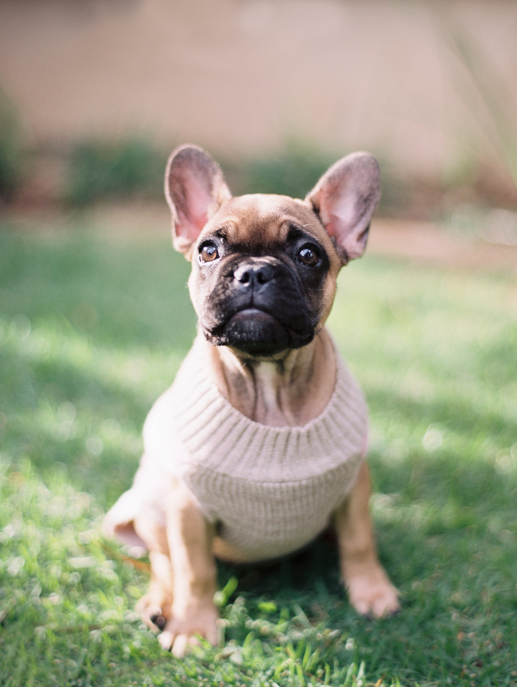 French Bull Dog Love_0004.jpg